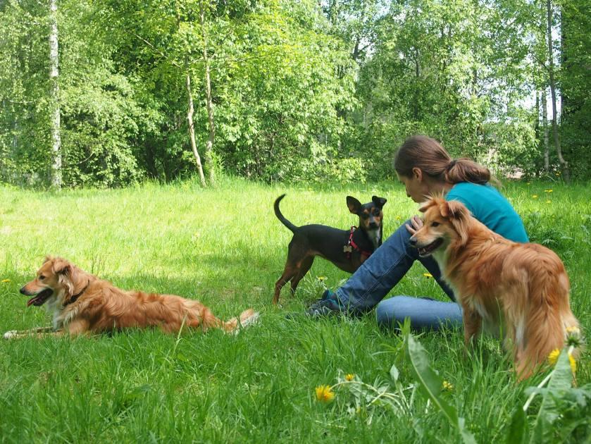 Ne on niin anteliaita - koirat. Mulla on nää kolme, jotka näet kuvassa. Espanjasta runsas pari vuotta sitten adoptoimiani ihanuuksia. Niillä on minulle aina aikaa.