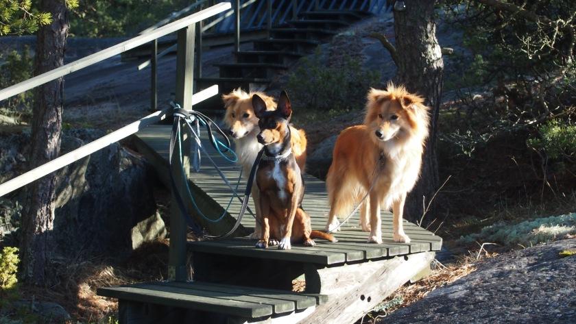 Tässä kaikki kolme. Vivi sekä veljekset Hupsu ja Simba.